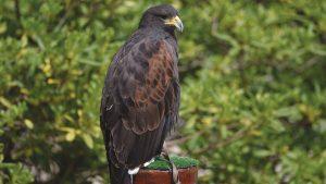 Falcon Centre Dubrava-4