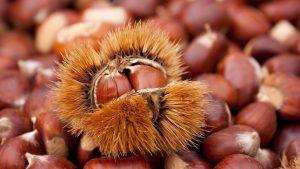 Marunada – Lovran Chestnut Festival-18